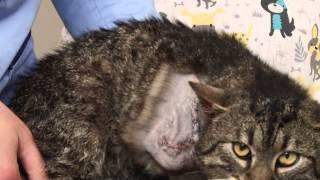 Kot bez łapki szuka domu