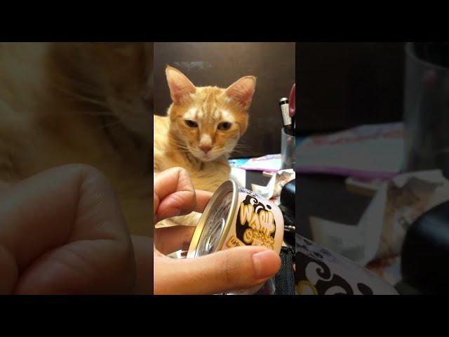 Kitty Hears the Can || ViralHog