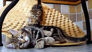 Funny Cats - Kittens on Slide