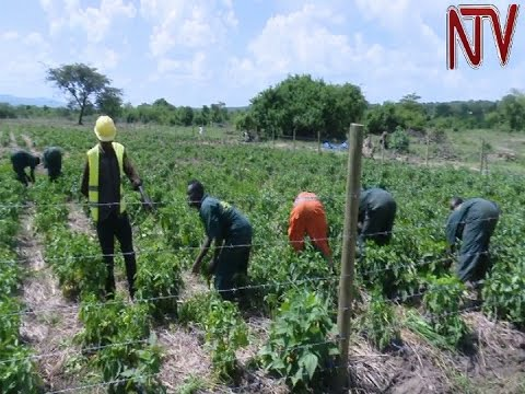 EU ambassador expresses concern over effects of climate change on food security in Uganda