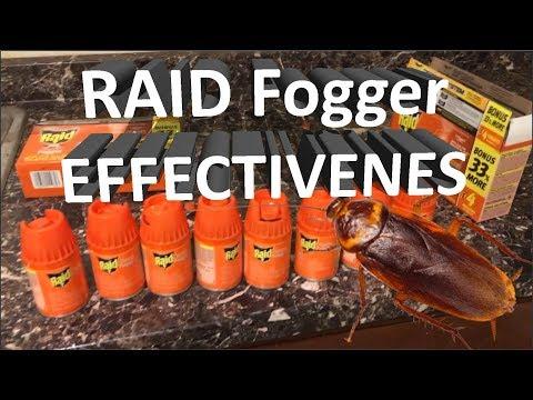 🦗 RAID Roach Fogger Effectiveness - Army Of Cockroaches Exterminated