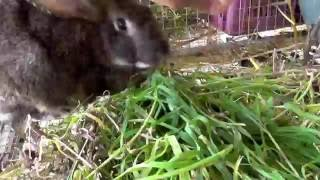 Уход за кроликами после окрола, чем кормить и как заботиться