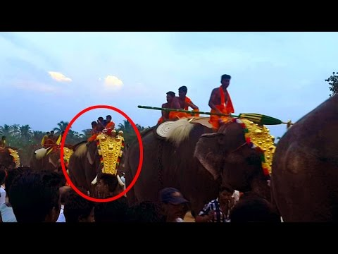 Most dangerous Elephants with Thechikottukavu Ramachandran (Above 20 ) #Walking After Pooram Fest