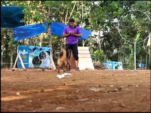 saajan saji cyriac dog training school at pala 09961310970