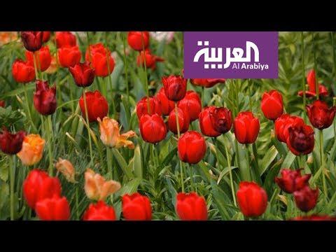 صباح العربية | البصيلات المزهرة زينة طبيعية لمنزلك  - نشر قبل 21 دقيقة