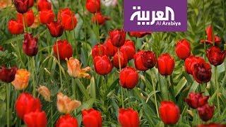 صباح العربية | البصيلات المزهرة زينة طبيعية لمنزلك