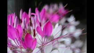 自宅庭に咲いていた花々とコラボしました。テレビ番組を思い浮かべなが...