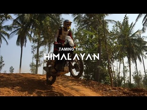 Taming The Himalayan with Tribal