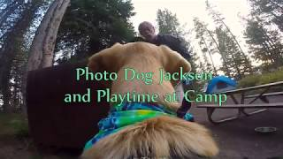 Photo Dog Jackson Gets to Play in Camp