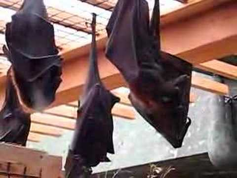 bats are creepy!