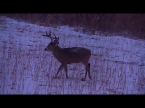 How To Anticipate Deer Movement & Weather | Cabela's Deer Nation