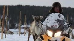 Rentierrennen im finnischen Lappland Vers.1.2