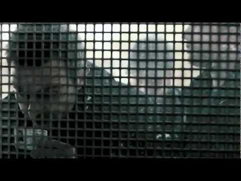 SCHUTZENGEL Trailer #3 [HD + Soundtrack] Til Schweiger, Moritz Bleibtreu, Luna Schweiger