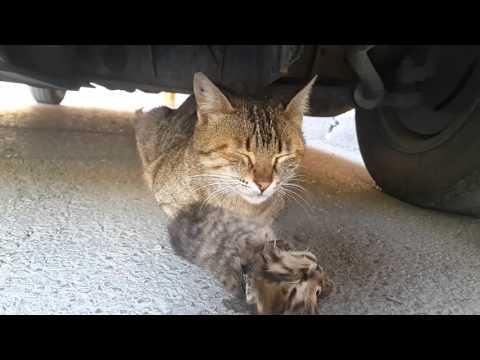 Mother cat's tears for her dead kitten.  Anne kedinin ölen yavrusu için döktüğü gözyaşı