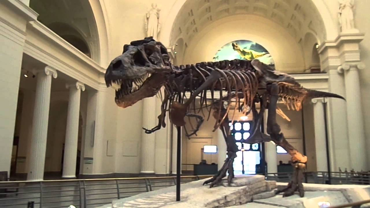 Museum Of Natural Science And History Chicago