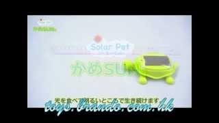 Solar Pet - Kame Sun Tortoise (Official by Takara Tomy)