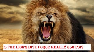 Is The Lions Bite Force Really 650 PSi - Lion Vs Tiger Actual Bite Force