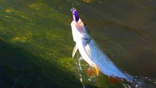Рыбалка на малых реках летом