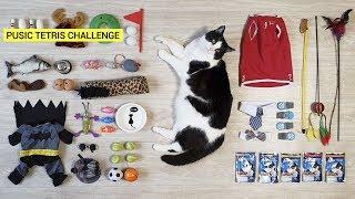 Tetris Challenge! My cat couldn't miss it!