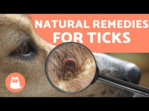 Preventing And Removing TICKS In DOGS 🕷️ 4 NATURAL REMEDIES