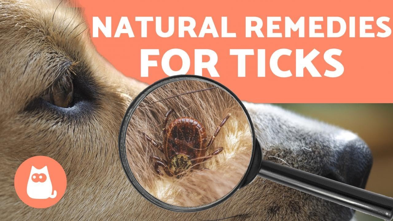 Tick Control for Dogs: Prevention & Treatment- Tractive Blog