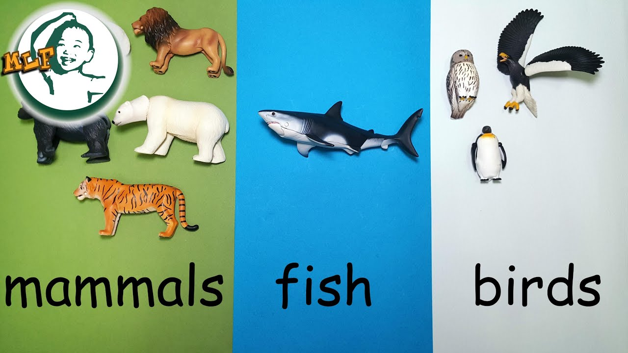 Learn animal classification and animal sounds for kids with Tomy ...