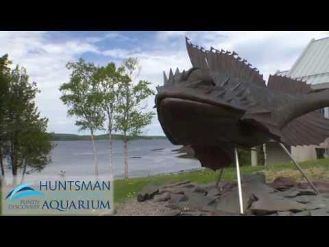 2015 06 10  HuntsmanMarine Aquarium2015 original
