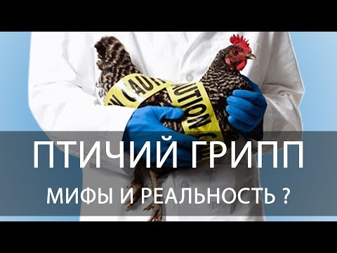 Птичий грипп и ПТИЦЕВОДСТВО - говорим с ветеринаром. Мифы и реальность.