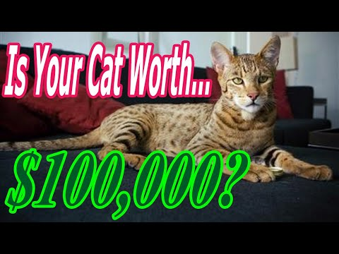 TOP 10 Most EXPENSIVE Cat Breeds in the world 2020 (How to: Breeding Cats) Cat Breed Worth $100,000