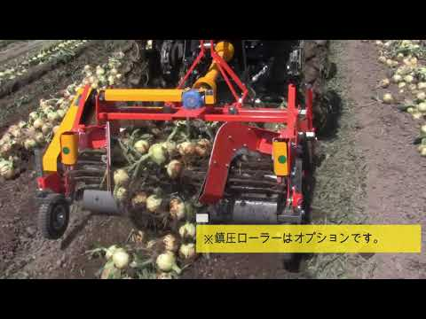 【キュウホー】玉ねぎデガー 佐賀県 onion