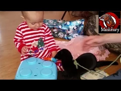Fang the Mink Helping Baby Olive Open Her Christmas Presents
