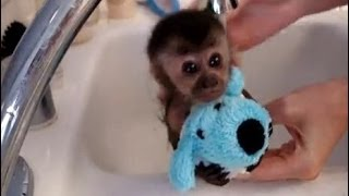 Funny Animal Bath Time