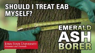 Should I treat EAB myself?