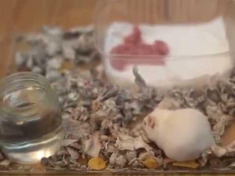 Cria de ratones primer d a de nacidos youtube - Como evitar los ratones ...
