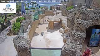 Preview of stream Hawaiian Monk Seal Habitat Mauka