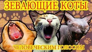 Зевающие коты человеческим голосом   Лучшие приколы 2016