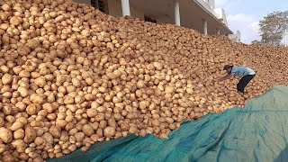Complete details on Large Scale Potato farming Using RAINWATER from Sowing to Lorry Loading | 2019