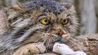 Самые злопамятные и своенравные породы кошек Почему коты злятся?