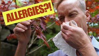 NATURAL ALLERGY CURE || No groggy feeling! || PLANT BASED