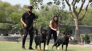 ROTTWEILER DOG BREEDER | SHURVEER KENNEL | ALL ABOUT ROTTWEILER | DOG BREEDER | SCOOBERS