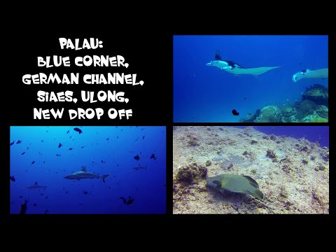 Diving Palau 2014 in FullHD