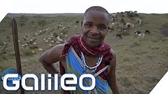 Massai-Krieger: Das ist ihr wichtigster Besitz | Galileo | ProSieben