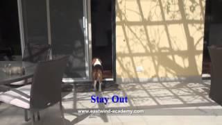 Beagle Dog Training Tips