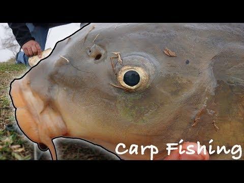 Braunig Lake Fresh Water big uglies (Common Carp)