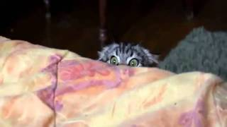 Psycho Katze   Unheimlich Süß lustiges Kätzchen