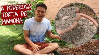 Como Preparar O Adubo Torta de Mamona Para suas Plantas