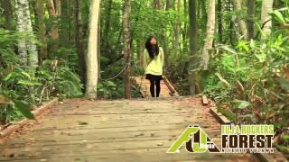 新潟県湯沢町苗場で展開されている森林保全活動「フジロックの森プロジ...