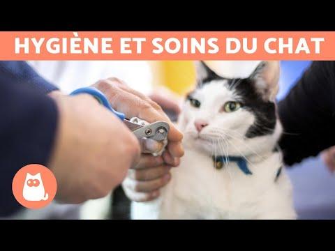 Comment Couper Les Griffes D'un Chat ? 🐱 Étape Par étape