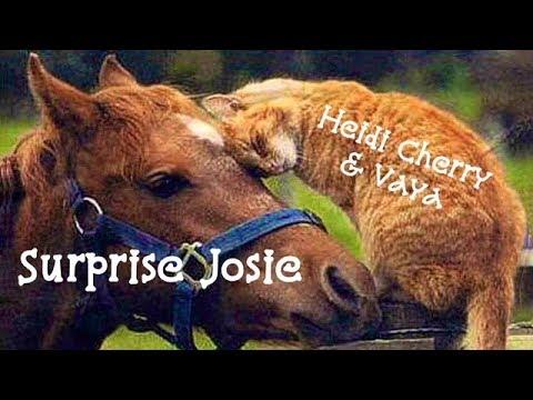 Heidi, Cherry & Vaya Suprise Josie - Children's Bedtime Story/Meditation