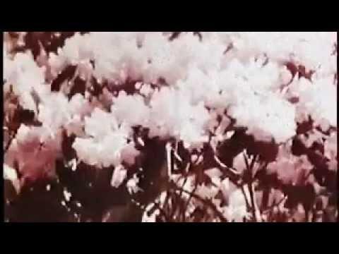 PDX: SEASONAL SHADES (A Musical Montage)